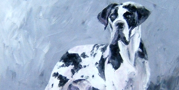 DOGUE ALLEMAND . huile couteau