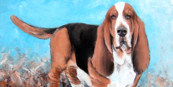 BASSET HOUND . huile couteau