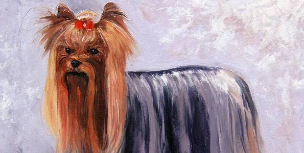 YORKSHIRE TERRIER . huile couteau