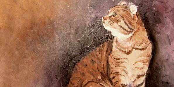 AMERICAN CURL . huile couteau