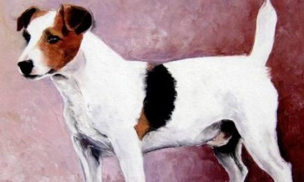 JACK RUSSELL TERRIER . huile couteau