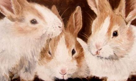 LAPINS . huile couteau