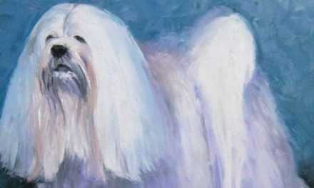 LHASSA APSO . huile couteau