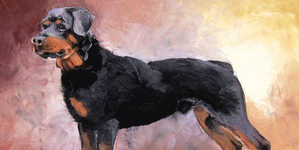 ROTTWEILER . huile couteau