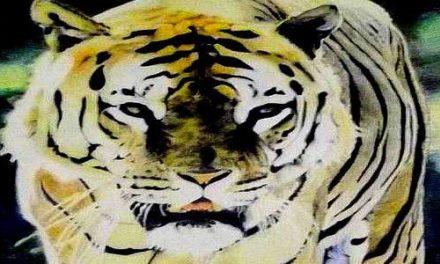 TIGRE . pastel